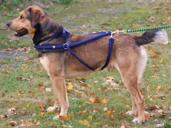 Brustblattgeschirr für Hunde