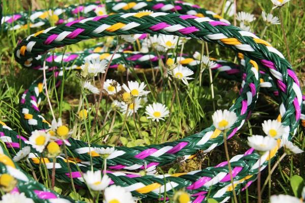 Gänseblümchen - Farbe des Monats
