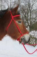 Trensenzaum / Pur Kopfstück ohne Blendklappen links