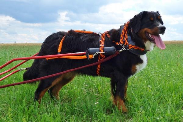 Kragengeschirr komplett für Hunde