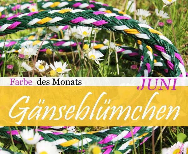 Gänseblümchen - Farbe des Monats (Juni)