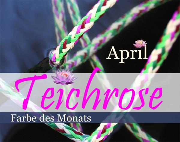 Teichrose - Farbe des Monats