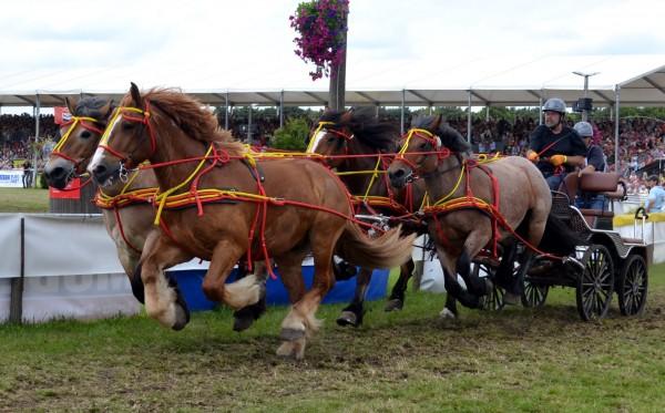 Vierspännerleine für alle Pferde, komplett